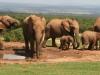 img_5201-addo-elephant-np