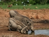 img_5205-addo-elephant-np
