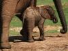 img_5209-addo-elephant-np