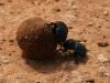 img_5222-addo-elephant-np