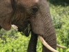 img_5225-addo-elephant-np
