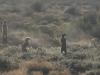 img_5287-meerkats-oudtshoorn